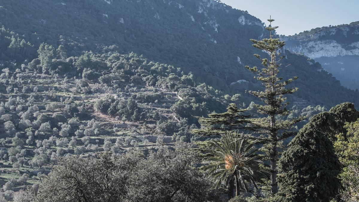 Olivenöl herstellung Mallorca