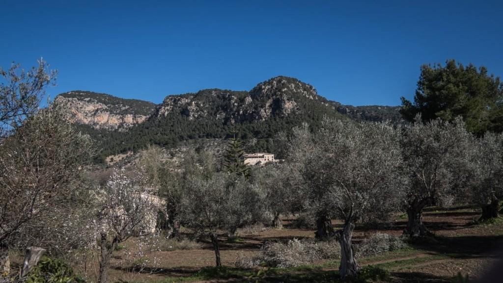 son-moragues-valldemossa-aceite-de-oliva-virgen-extra-serra-de-tramuntana-02