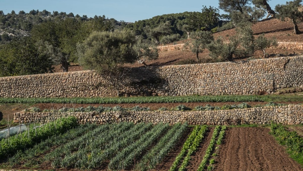 Huertos ecologicos en Mallorca