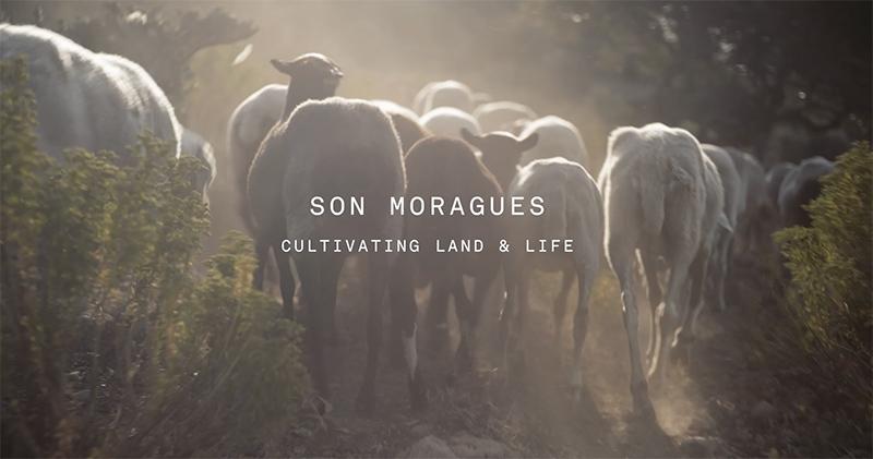 son-moragues-slow-summer